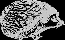 herisson-blanc-d
